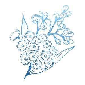 sunburnt-country-stamp-acacia-blooms