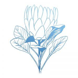 sunburnt-country-stamp-protea