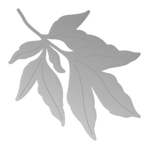 CO727388_PP_Leafy_Branch