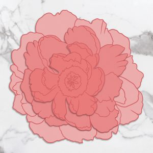 CO727422_PP_Large_Peony