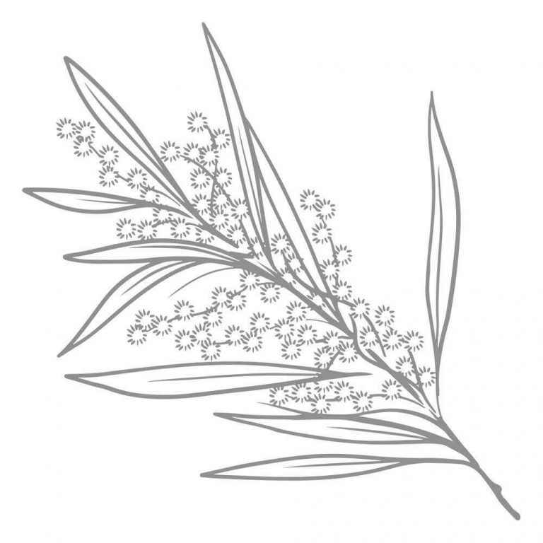 CO727991-Sweeping-Plains-Mini-Stamp-Acacia-Branch